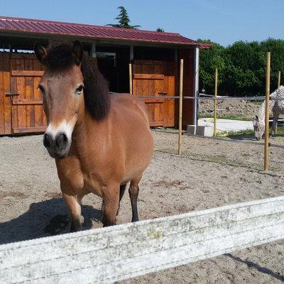 Approccio al Cavallo: aperte le iscrizioni